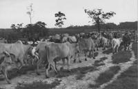 Vista parcial de uma fazenda : Amapá, AP