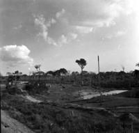 Açude em uma fazenda da BR-317 próximo a Xapuri : município de Xapuri
