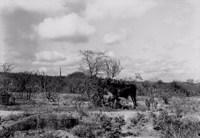 Caatinga em Soledade (PB)