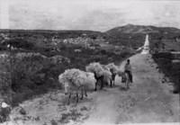 Transporte de fibra de agave em Juru (PB)