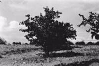 Planta da caatinga (PB)