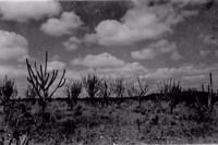 Caatinga seca na Fazenda Cabeça de Boi em Soledade (PB)
