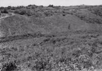 Vegetação nas encostas no Cabo de Santo Agostinho (PE)