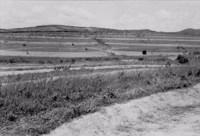Terraços no posto experimental da Fábrica Peixe : Município de Pesqueira