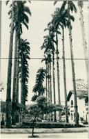 Alameda Brüstlein : Monumento a Dona Francisca : Joinville, SC