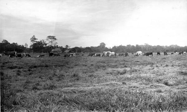 Fazenda : Tarauacá, AC - [195-?]