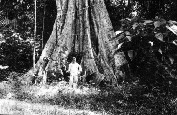 Tronco de Apuí em Rio Branco (AC) - jan. 1953