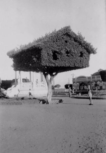 Arbusto decorado em um parque de Maceió (AL) - 1956