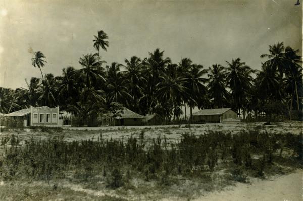 Coqueiral no povoado de Bonito : Piaçabuçu, AL - [19--]