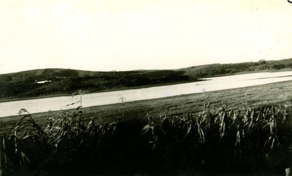 Plantação de arroz : São Brás, AL - [19--]
