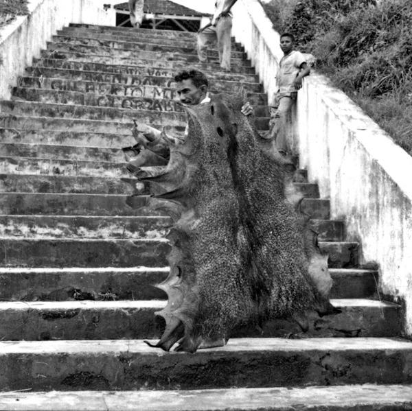 Transporte de couro de veado e caetitu no Porto de Borba (AM) - mar. 1966