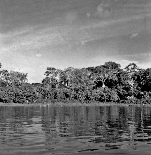 Zona cacaueira à margem do Rio Urucurituba (AM) - 1966