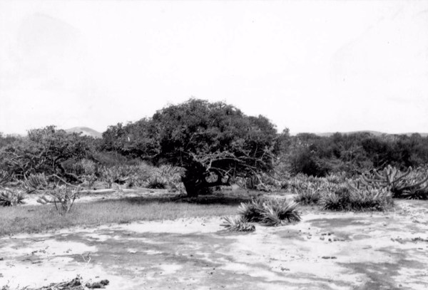 Caatinga em Itatim (BA) - 1957