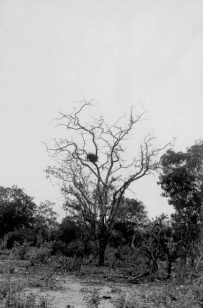 Caatinga em Curaçá (BA) - 1957