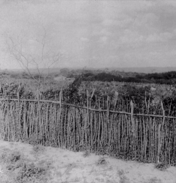 Roça e cerca viva no Povoado de Patos em Santo Estevão (BA) - 1962