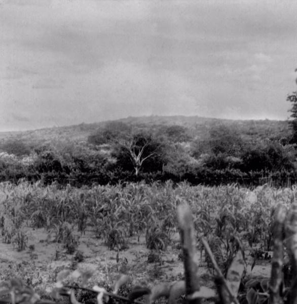Roça no Povoado de Patos em Santo Estevão (BA) - 1962