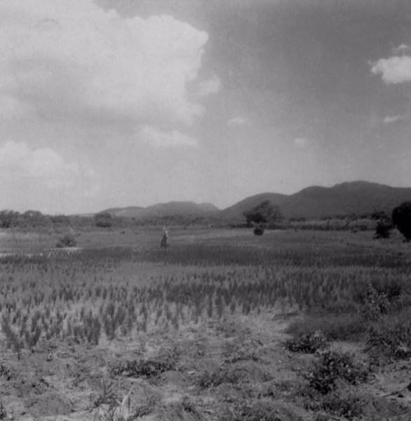 Plantações no Povoado Cruz na cidade de São Gonçalo dos Campos (BA) - fev. 1962