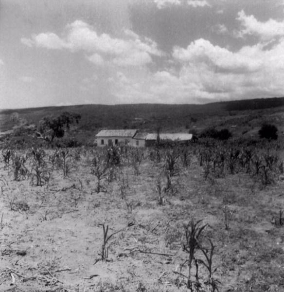 Roçado no Arraial de Cutia em Conceição do Coité (BA) - fev. 1962