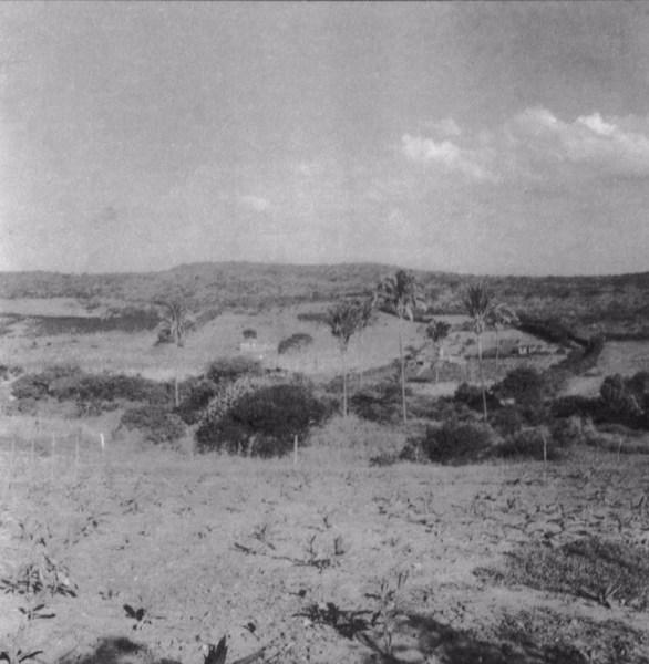 Plantação de fumo em Itororó (BA) - fev. 1962