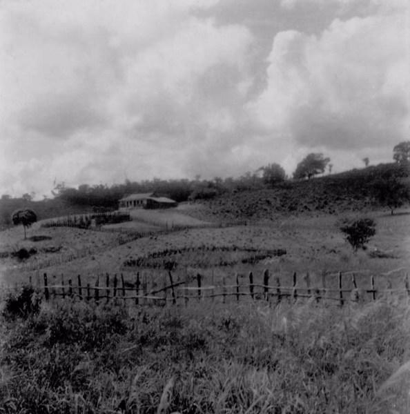 Fazenda de gado em Mundo Novo (BA) - fev. 1962