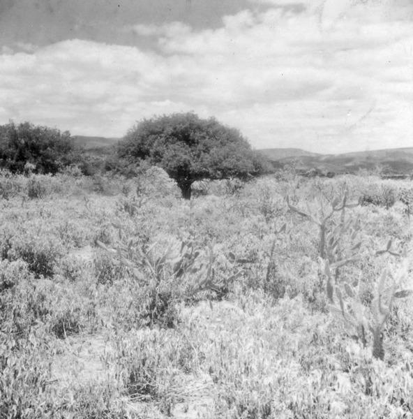 Caatinga em Jacobina (BA) - fev. 1962