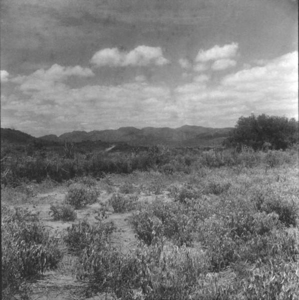 Caatinga : município de Jacobina - 1962