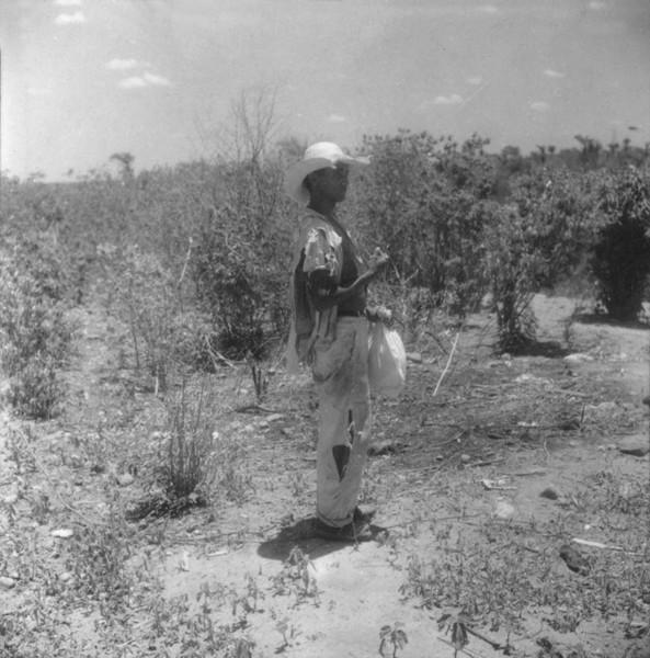 Trabalhador de plantação de sisal no Distrito de Porto Novo em Santana (BA) - 1962