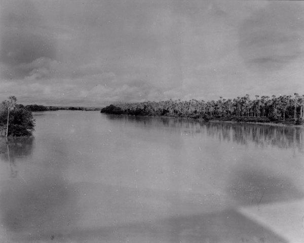 Carnaubal na margem do Rio Banabuiú em Limoeiro do Norte (CE) - maio. 1952