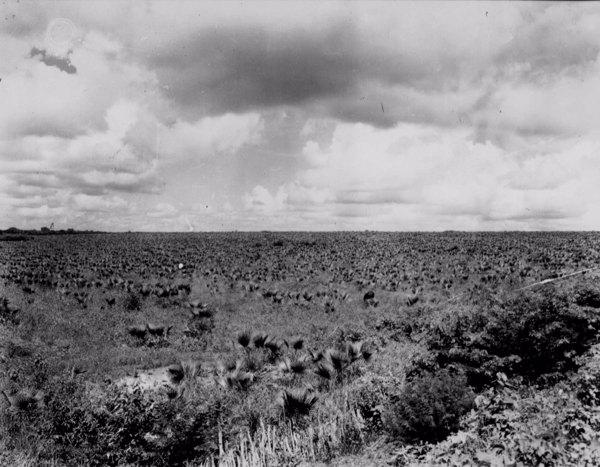 Carnaubal em Horizonte (CE) - maio. 1952