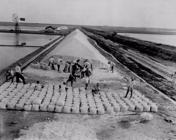 Exploração do sal nas salinas do Rio Aracati em Aracati (CE) - maio. 1952