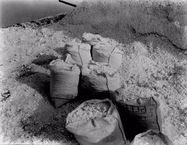 Sacos de sal nas salinas do Rio Aracati em Aracati (CE) - maio. 1952