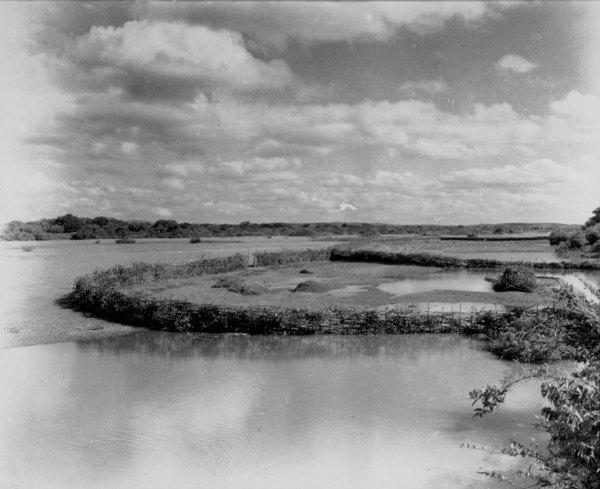 Plantação de mandioca na Chapada do Araripe em Santana do Cariri (CE) - jun. 1952
