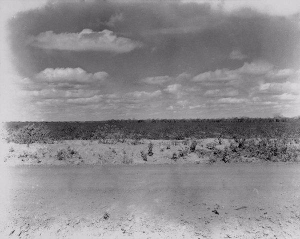 Plantação no leito do Rio Jaguaribe em Icó (CE) - jun. 1952