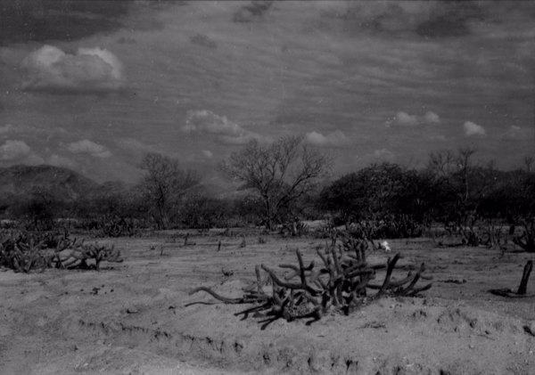 Caatinga no semi - árido cearense na cidade de Irauçuba (CE) - 1957