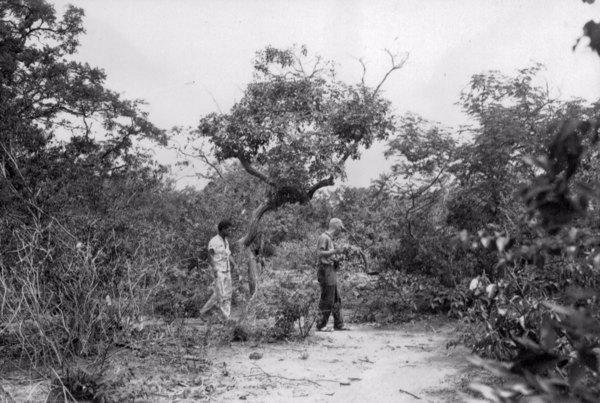 Cerrado Tabajara na Chapada do Araripe em Barbalha (CE) - 1957