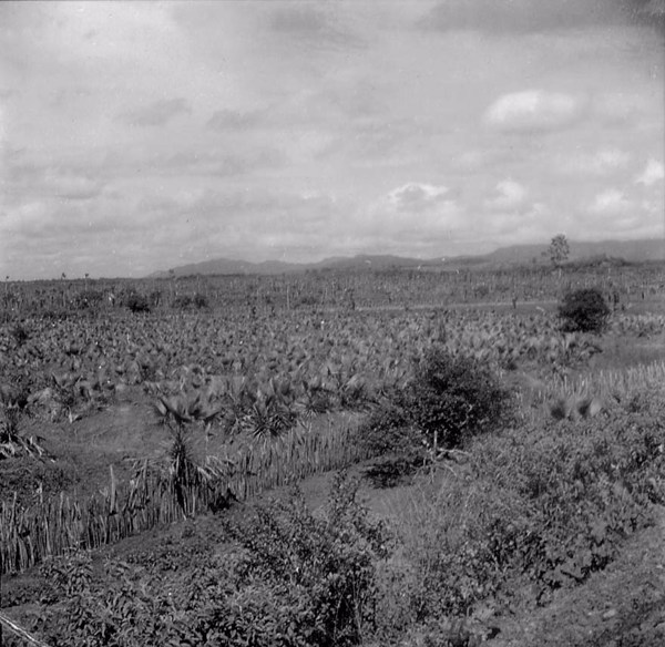 Plantação de carnaúba em Aquiraz (CE) - maio . 196