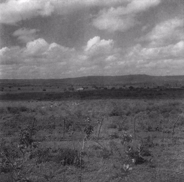 Agricultura no baixio do Riacho Xique - Xique : Município de Potengi - [196-]