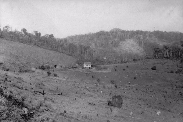 Fazenda de café entre São Gabriel e a Vila Pancas (ES) - 1952
