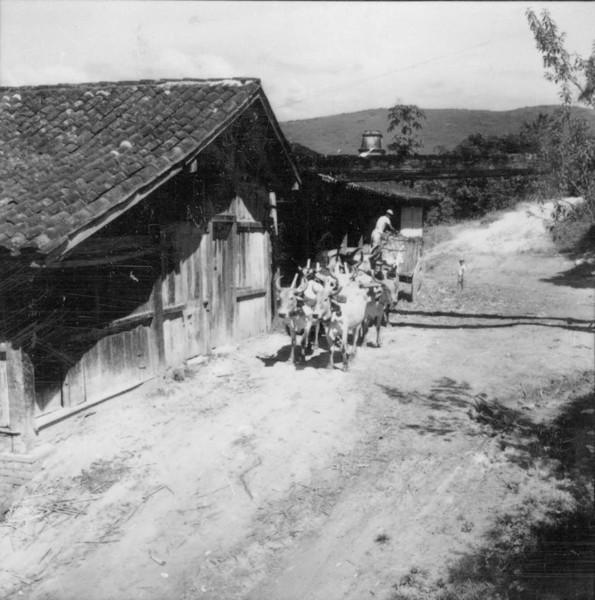 Carro de bois, trazendo cana para o engenho de aguardente - Bom Jesus do Norte (MG) - 1957