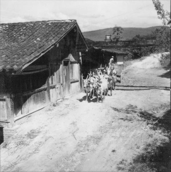 Carro de bois, trazendo cana para o engenho de aguardente - Bom Jesus do Norte (ES) - 1957