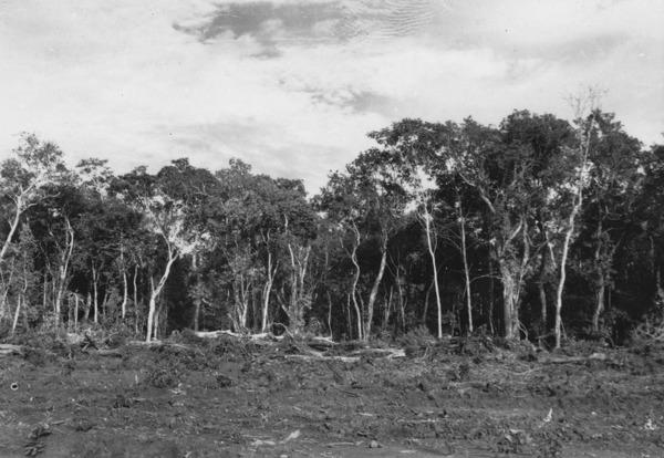 Aspecto da mata na beira da estrada entre Goiânia e Anápolis (GO) - 1957