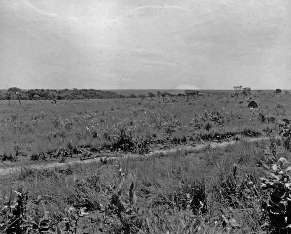 Campo limpo com capão de mato, entre Jataí e Mineiros (GO) - 1953