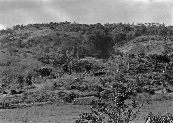 Mata seca próxima a Paranaíba perto de Catalão (GO) - 1954
