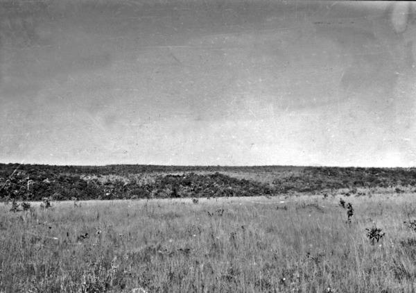 Testemunho da chapada perto de Luziânia (GO) - 1954