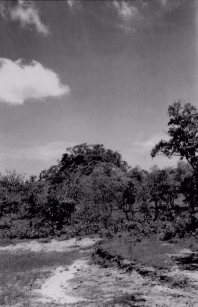 Vegetação na margem da estrada que liga Caxias a Codó (MA) - 1957