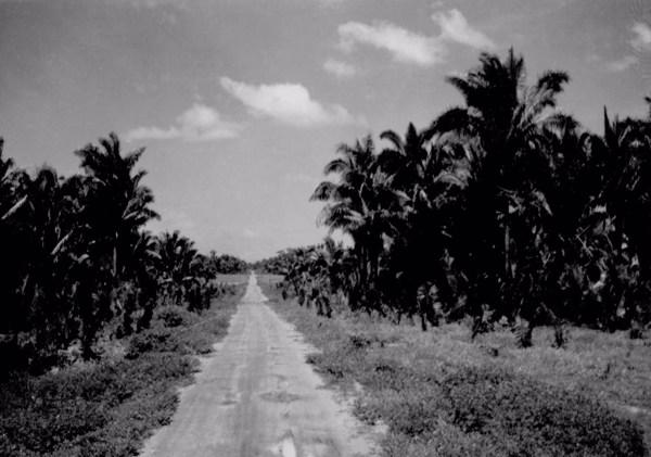 Estrada entre babaçual que liga Coroatá a Codó (MA) - 1957
