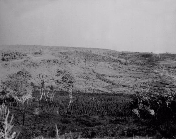Plantações na Estrada Rio Verde em Ituiutaba (MG) - 1952