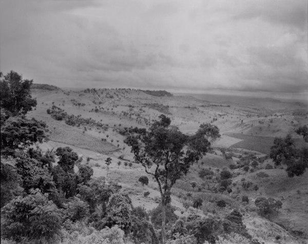 Vegetação na margem da estrada que liga São Gotardo a Dores do Indaiá (MG) - fev. 1952