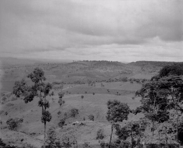 Vegetação na margem da estrada que liga São Gotardo a Dores do Indaiá (MG) - maio. 1952