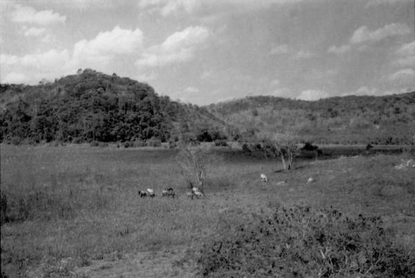 Pastagens em São João Evangelista (MG) - 1952